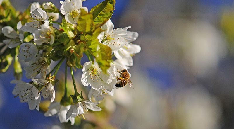 Image for Blommande träd, buskar och insektshotell ska hjälpa pollinatörer